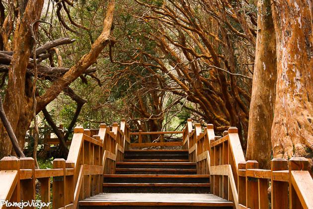 Veja como o corrimão da trilha guia o seu olhar para o centro da foto (Bosque dos Arrayanes - Argentina)